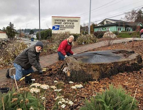 Oak Harbor Post Office Native Plant Garden Thrives Again