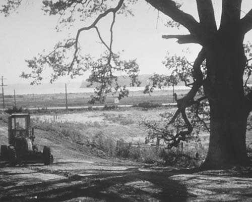 Giant Garry oak on Keister family farm which later became known as the Post Office Tree. Circa late 1950's. Photo credit Peggy Darst Townsdin collection.