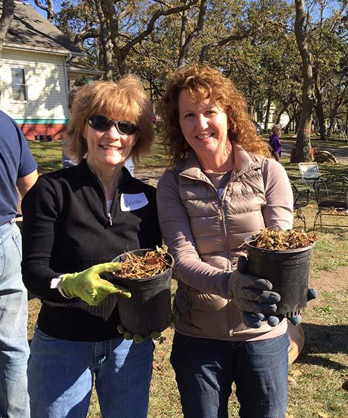 Planting Garry oak trees