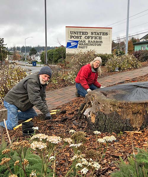 Post Office Garry Oak Stump - Oak Harbor WA - Oak Harbor Native Plant Garden Adopted by Oak Harbor Garry Oak Society