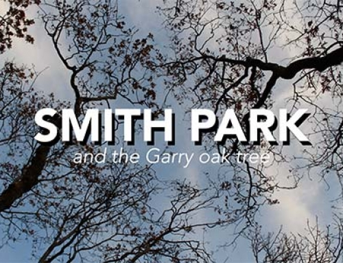 New Short Film – Smith Park and the Garry Oak Tree