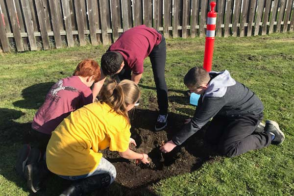 Students planting Garry oaks at Oak Harbor Intermediate School