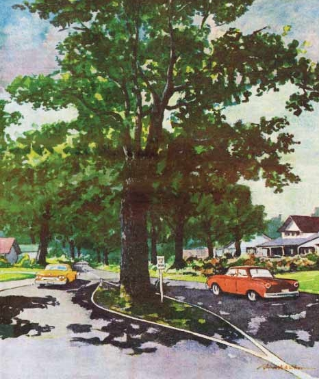 Oak Harbor Garry Oak Tree Tour - See the beautiful trees for which our city was named.